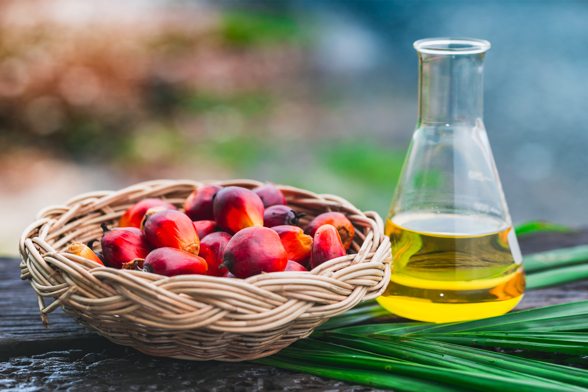l olio di palma e nocivo per la salute   grand chef evolution